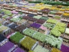FloraHolland Distributie halKlokken Tribunegemaakt op :11-4-08